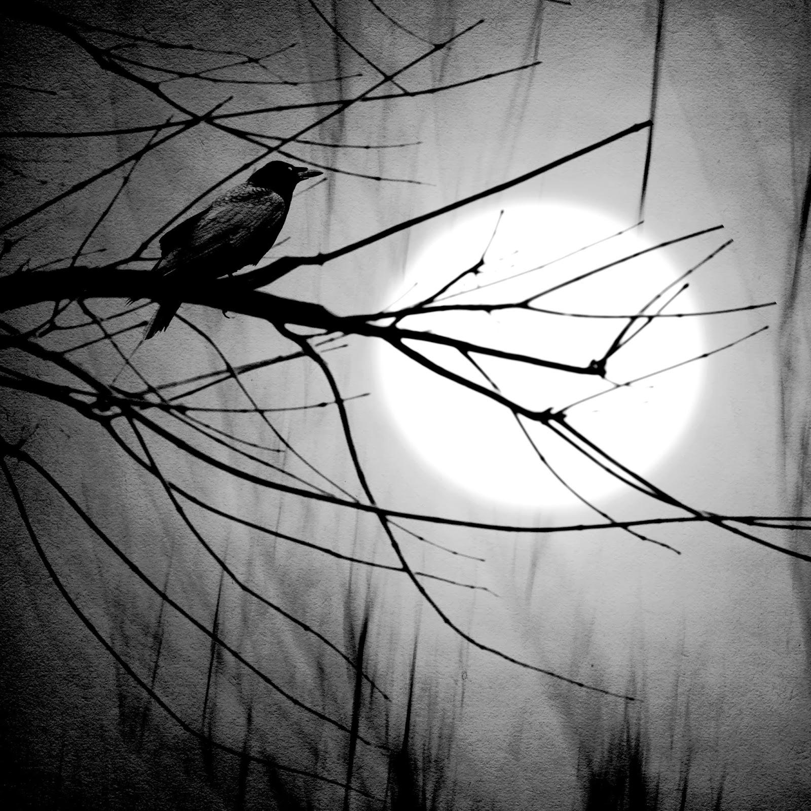"""Ponure Poniedziałki: Daphne du Maurier """"Ptaki"""""""