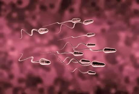 sel sperma