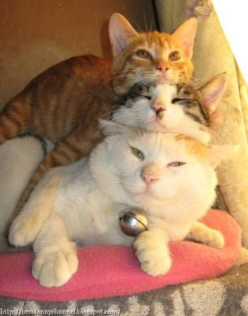 Three funny cats.