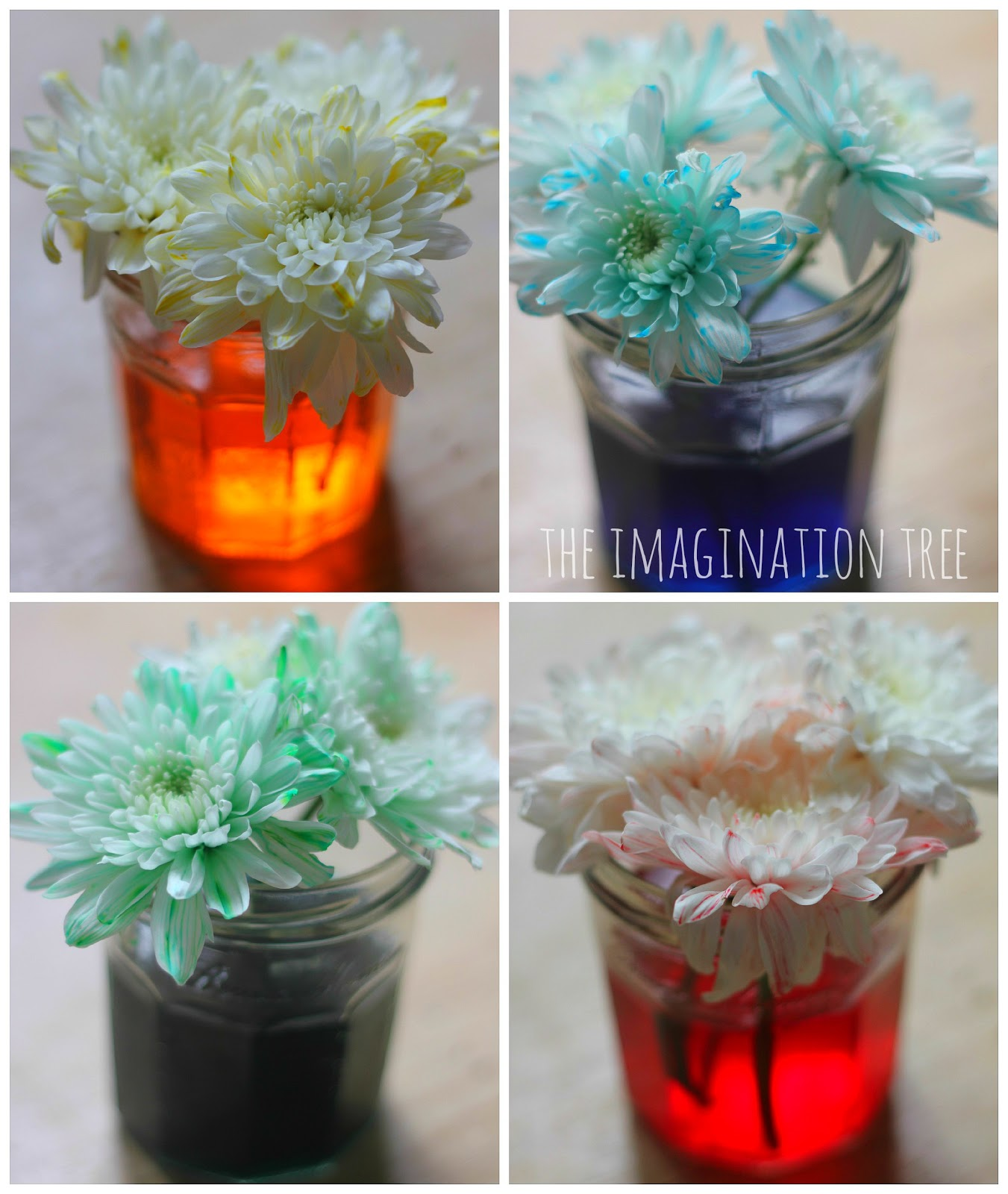 dyed flowers science experiment the imagination tree