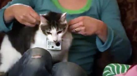 Gato com câmera - Publicitário13