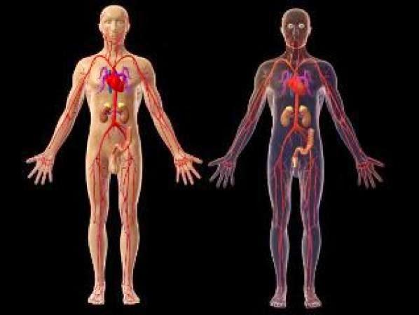 Google Body – novi 3D anatomski  medicinski preglednik