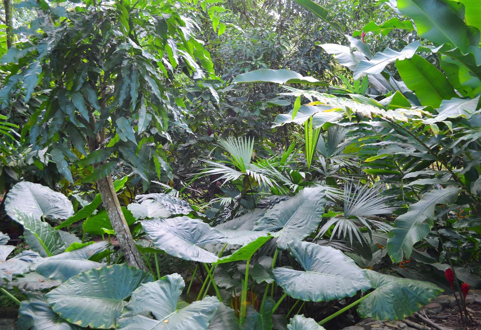 Pintura Moderna y Fotografía Artística : Imagen selva del Amazonas ...