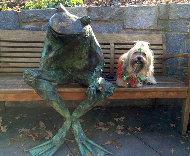 Rocco Havanese Atlanta Botanical Garden frog on bench
