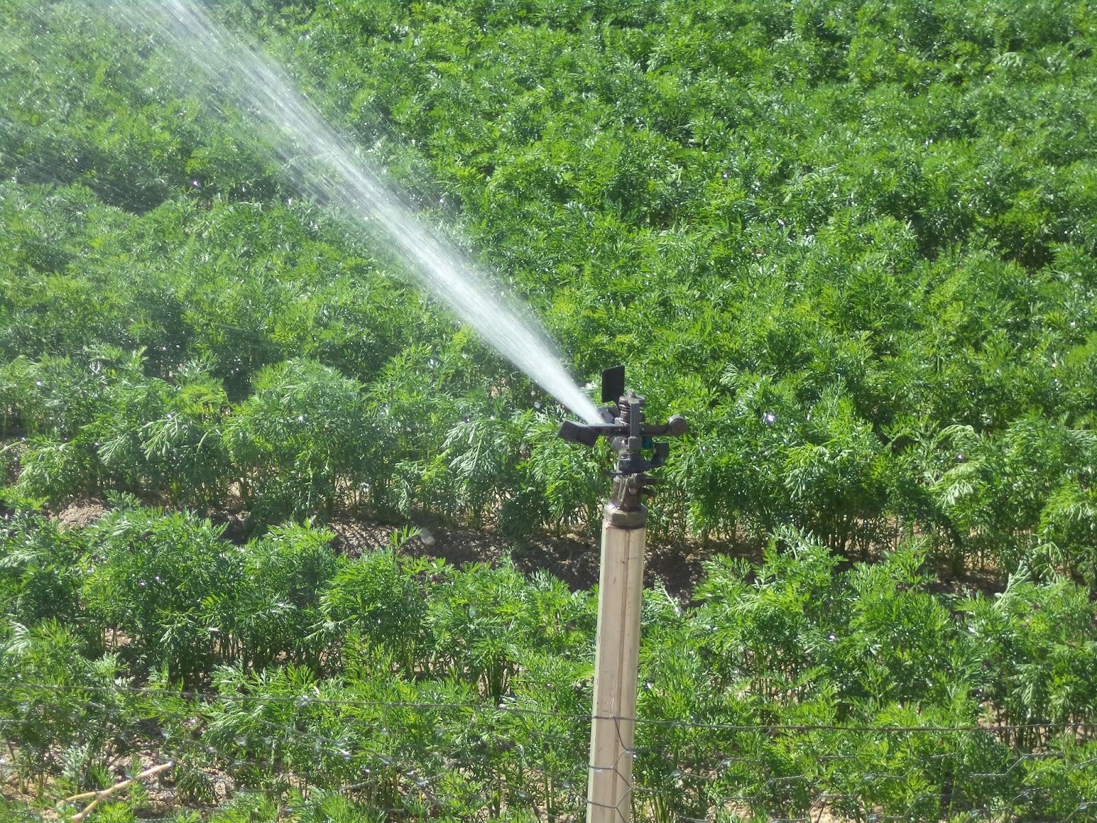 Abeceagrario regad o conocer la agricultura y la ganader a for Aspersores para riego