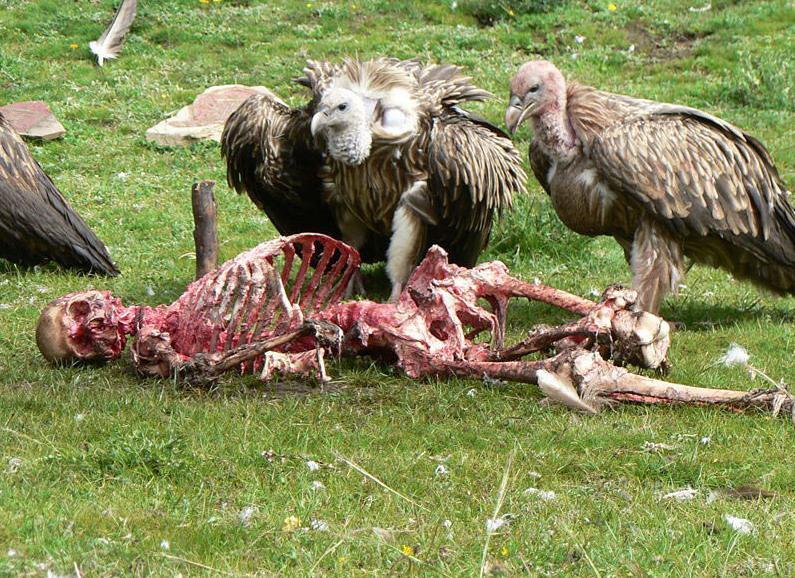 Vultures+eating+dead+people.jpg
