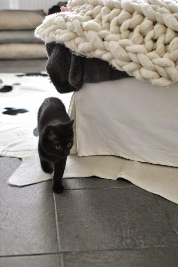 svart kattunge