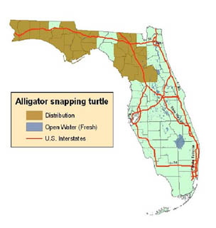 The Alligator Snapping Turtle Florida S Largest Freshwater Turtle