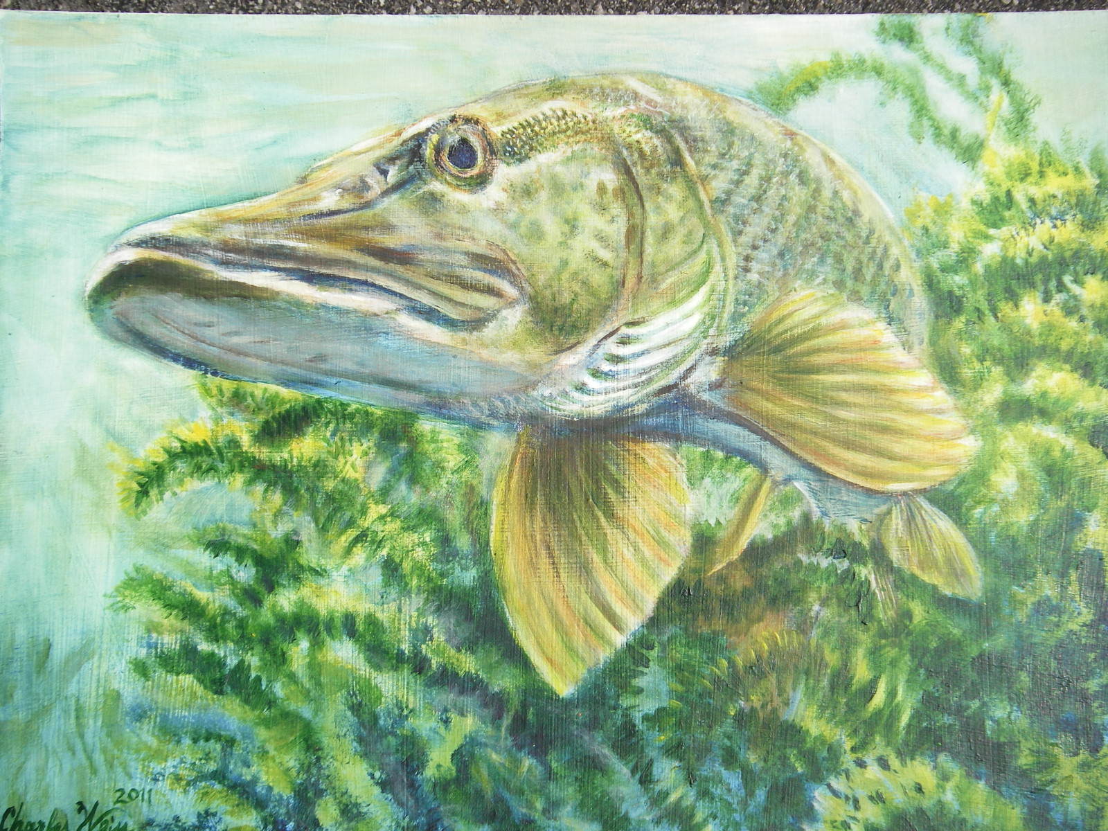 Musky Drawings http://www.pic2fly.com/Musky+Drawings.html