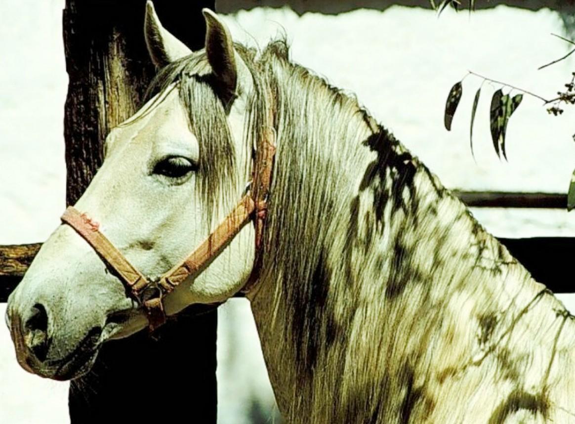 fotos de caballos para pintar al oleo