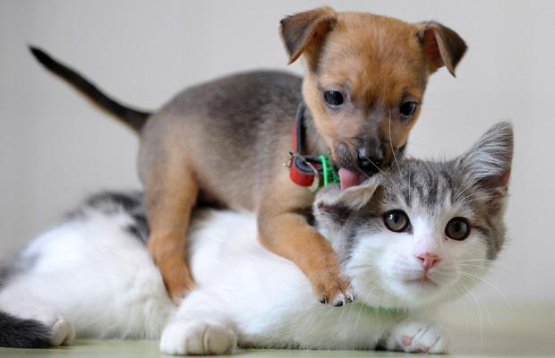 Funny & Cute Cats: Kittens and Puppies Pictures German Shepherd Dog Reviews