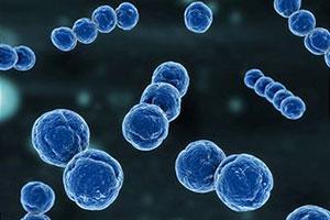 Система комплемента и функциональная активность фагоцитов при гнойно-воспалительных болезнях