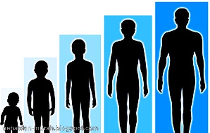 Tinggi badan