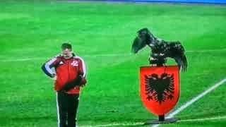 Un aquila sorvola lo stadio dell'Albania prima della partita.