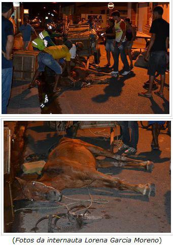 Cavalo não suporta peso e cai em Itabaiana (PB)