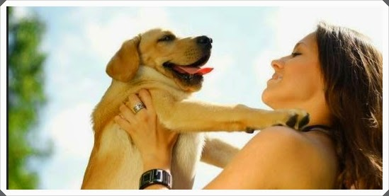 Affection for dogs