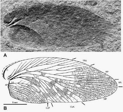 http://sciencythoughts.blogspot.co.uk/2014/01/a-fossil-cockroach-from-earliest-late.html