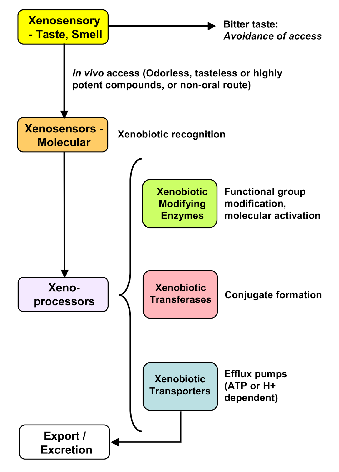 Xenobiotics - this is what is classification and characterization 3