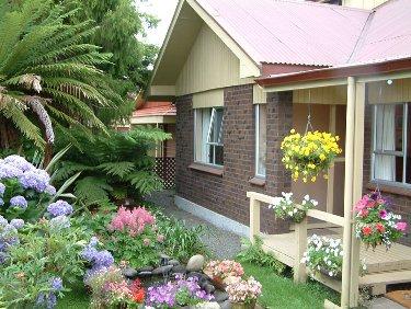 kebun di belakang rumah
