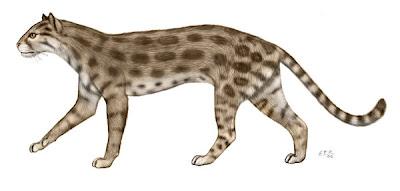 carnivora fosil Pseudaelurus