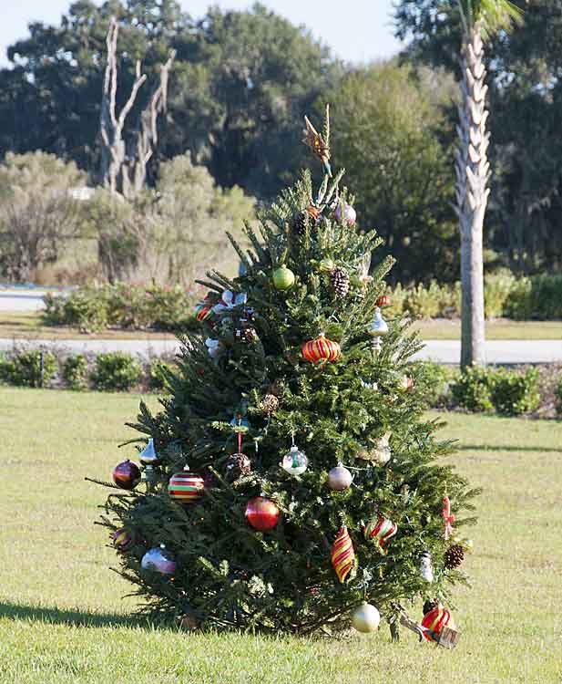 Happenings at florida grande fleeting festive fragments for Florida grande motor coach resort