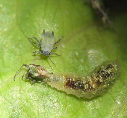 plagas, insectos y enfermedades de plantas