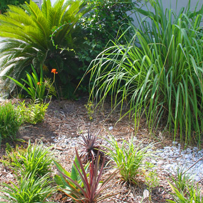 drought tolerant garden. How To Plant A Lush Drought Tolerant Garden