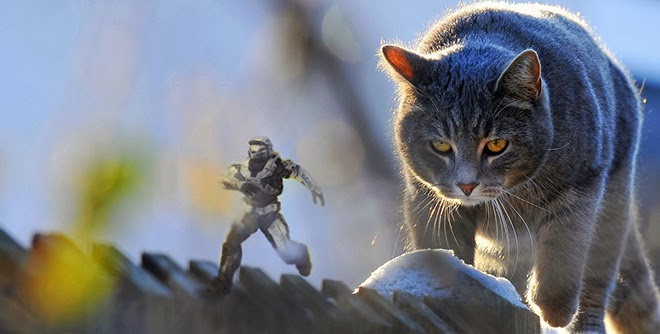 Master Chief chased by a cat