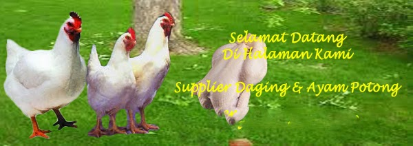 supplier daging ayam