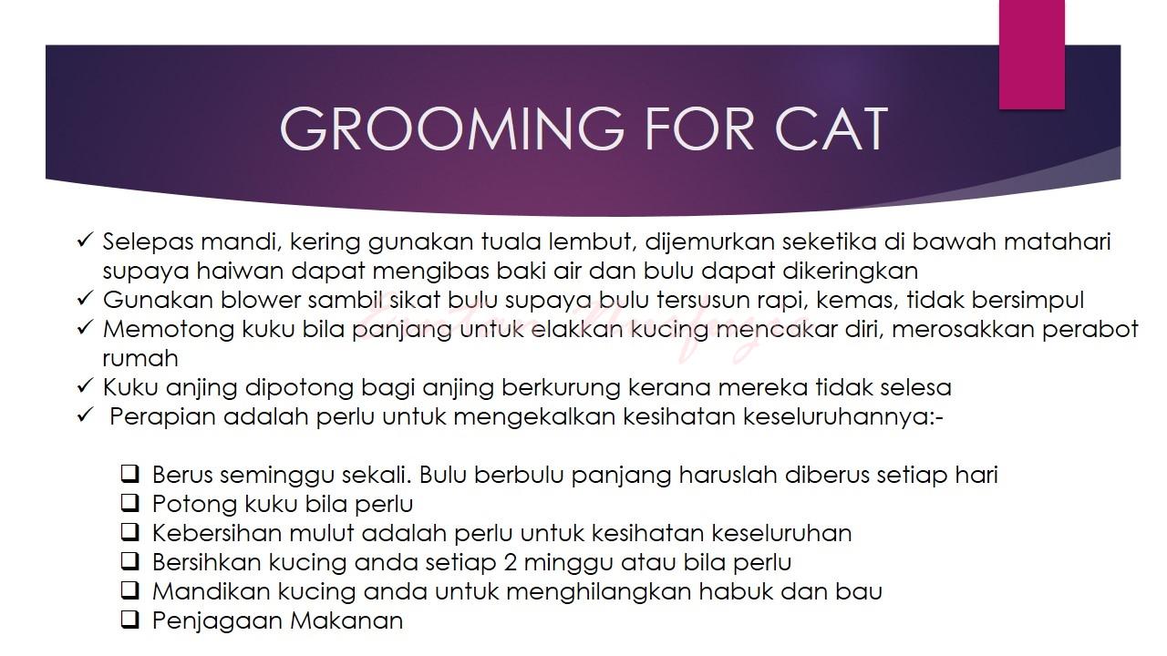 cara grooming haiwan kucing anjing