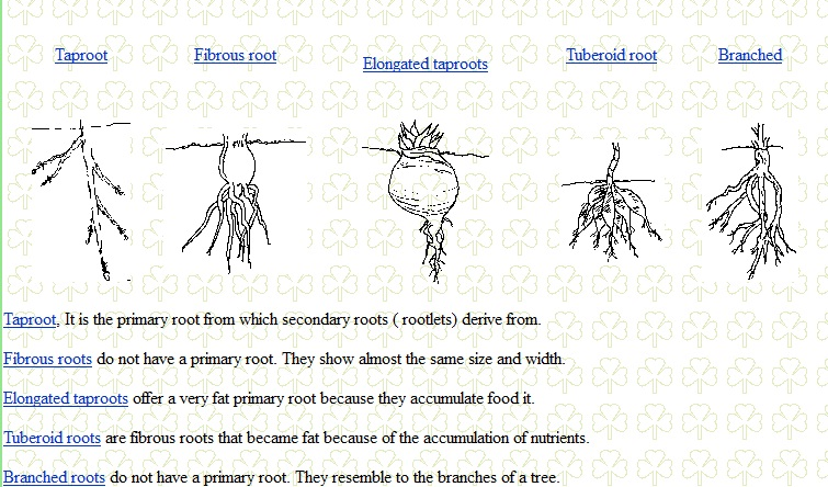Biolojoy Roots And Types Of Roots