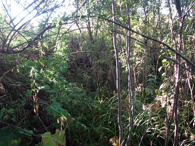 заросший лиственный лес