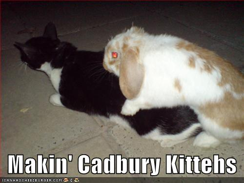 Funny Collection: Funny Kittens