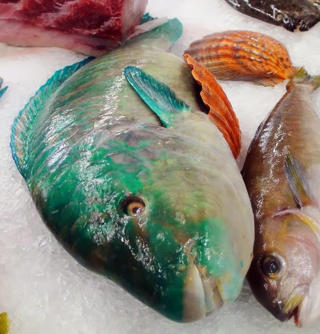 The edible ocean the odd parrotfish for Types of edible fish