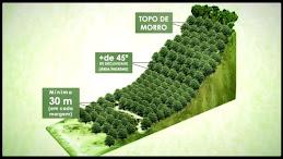 Código Florestal nos protege