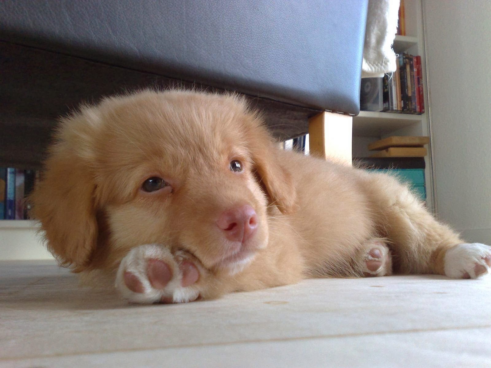 Cute dogs - part 8 (50 pics), cute puppy lays on floor