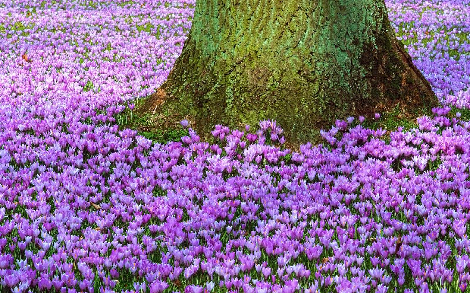 lente achtergronden hd - photo #6