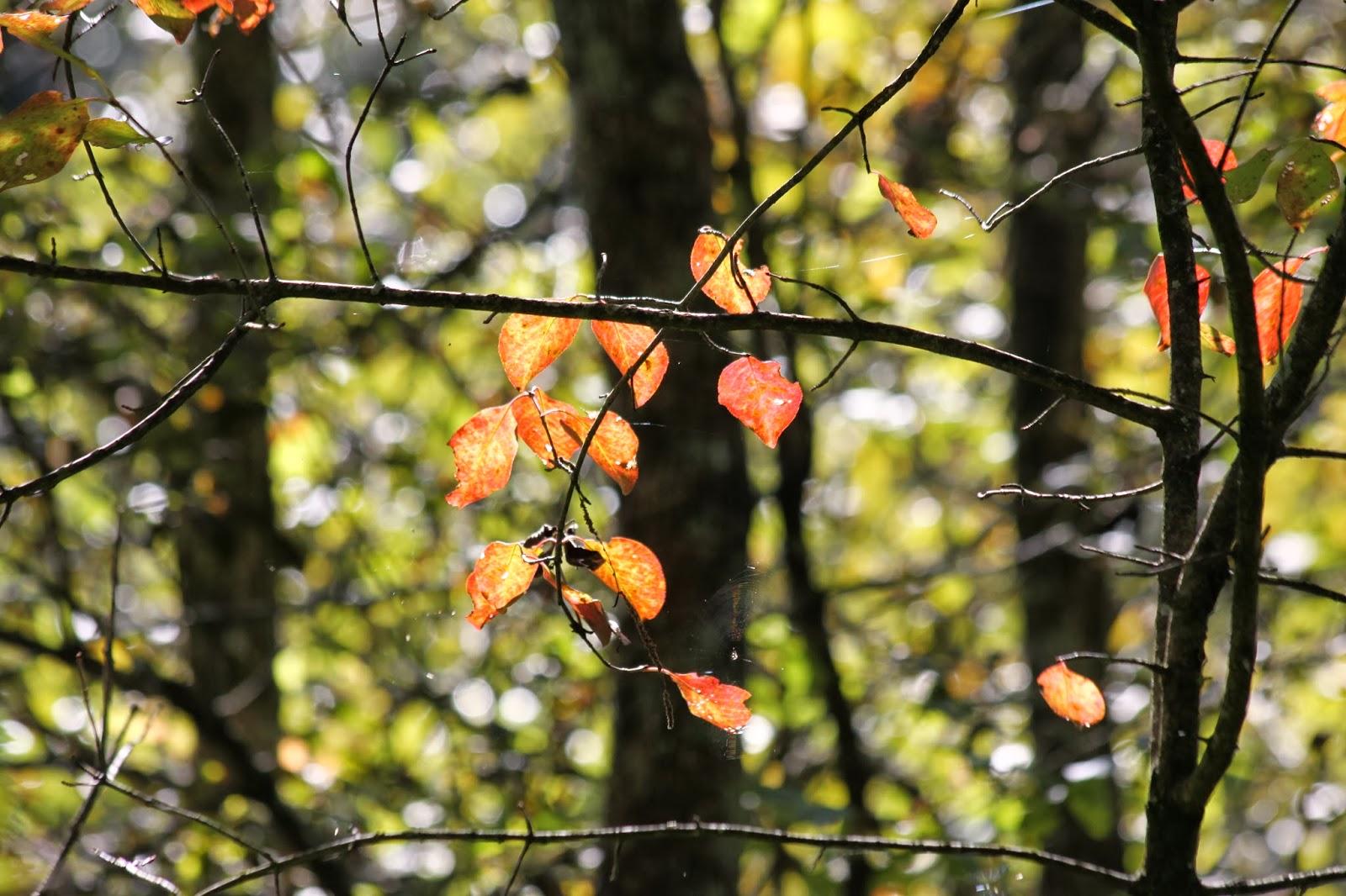 Lexington Il Nature Center