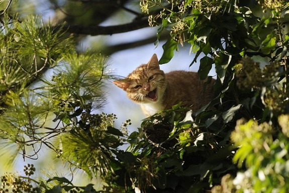 If you see a cat stuck in a tree, will you save it?