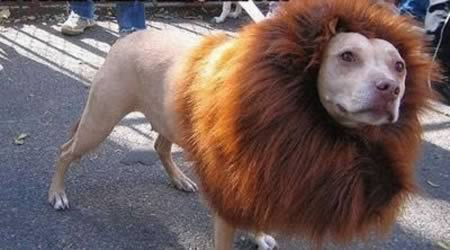 http://2.bp.blogspot.com/-YQFwA8eVaAM/TpKgGSd8hYI/AAAAAAAABVM/7_NxCcKr7yY/s1600/a97931_animal-hair_12-lion.jpg