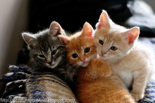 Three cute cats.