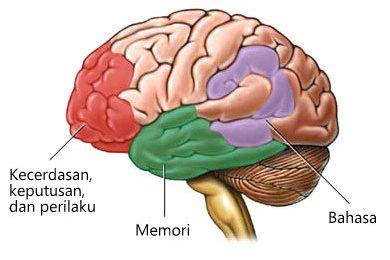 Area otak yang dipengaruhi Alzheimer
