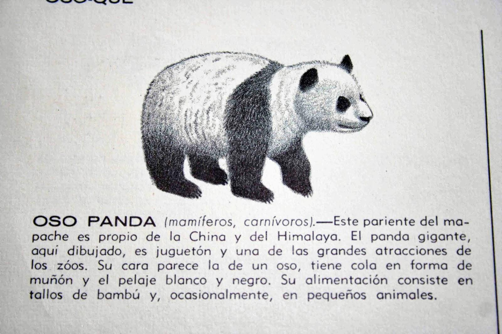 Celebrando el cumpleaos del Oso panda y actividades homeschooling