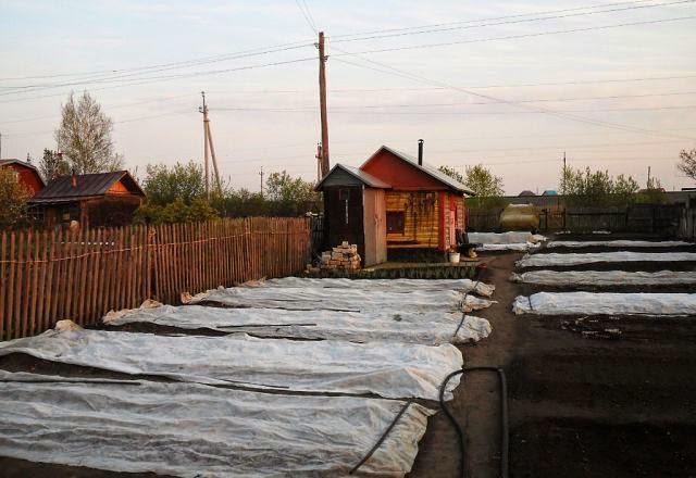 10.05 укрытия от заморозка для клубники