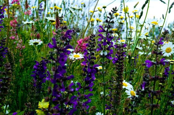 Il giardino sfumato erbario d 39 estate - Il giardino d estate ...