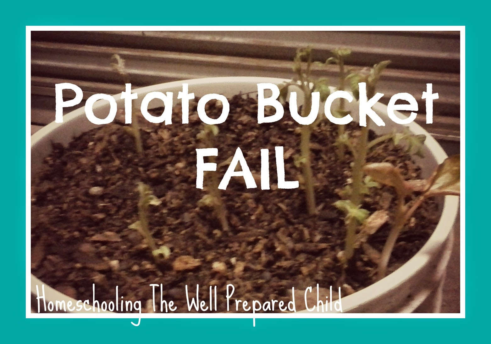 Homeschooling The Well Prepared Child: Potato Bucket FAIL