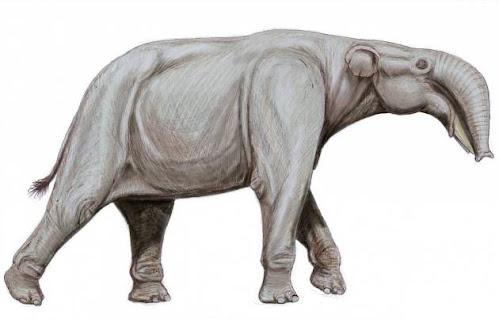 elefante extinto Prodeinotherium
