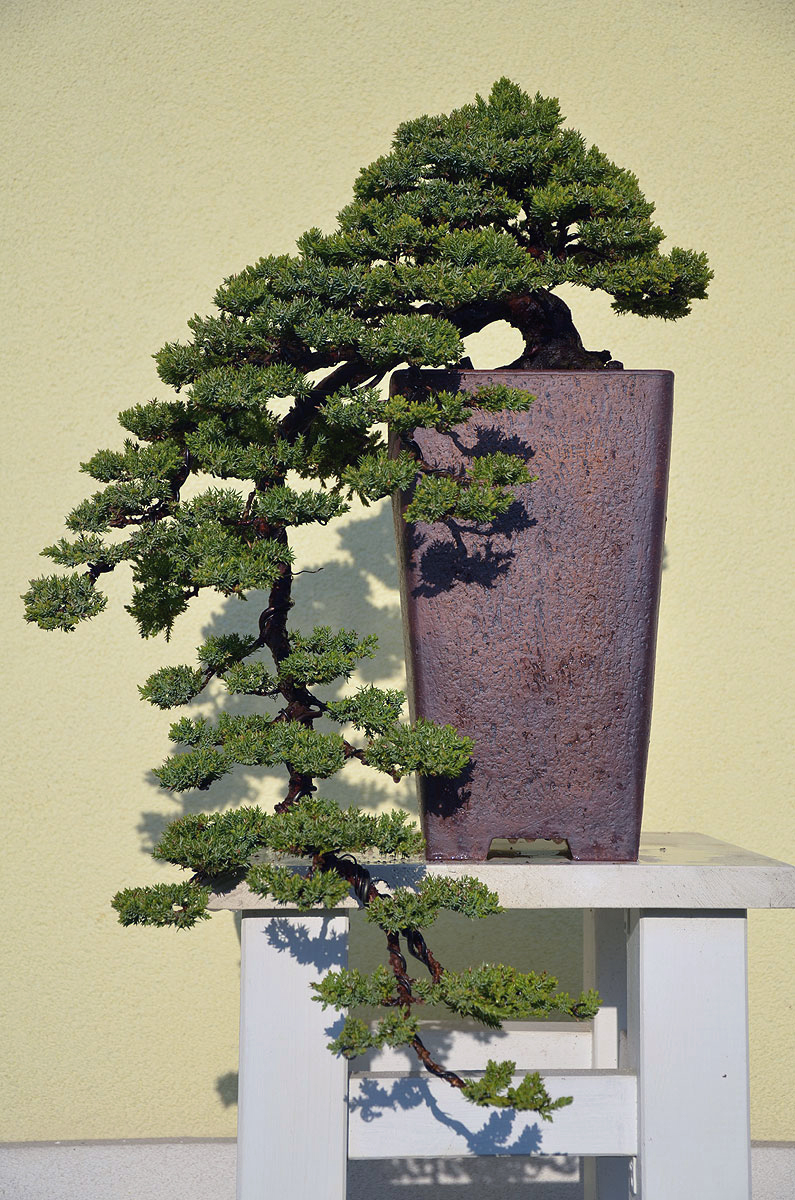 Bonsai Living Art New Pot For My Waterfall