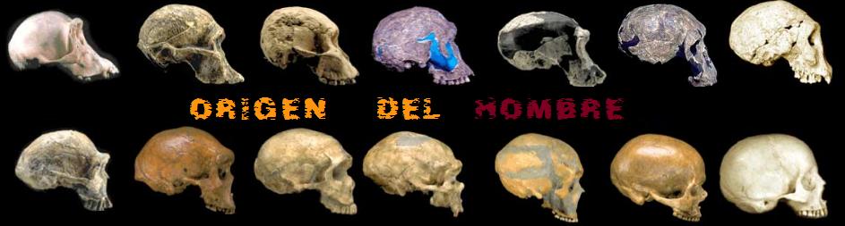 Los origenes del hombre