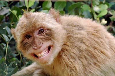 http://2.bp.blogspot.com/-YRyYUU1uRXU/TZMCmYGzvRI/AAAAAAAAAs4/yxdbmwDkSEY/s1600/Happy-Smiling-Animals-006.jpg